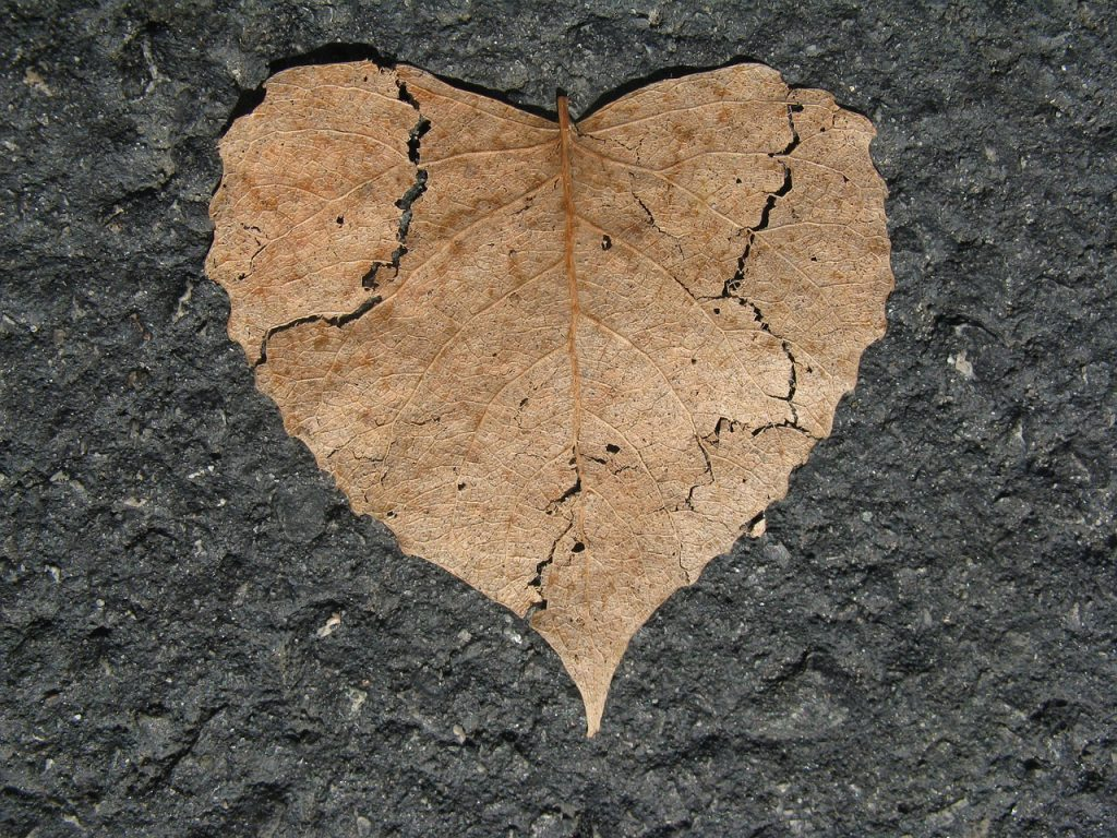 ripped heart leaf